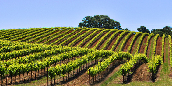Thank You for Your Interest in Sonoma County!